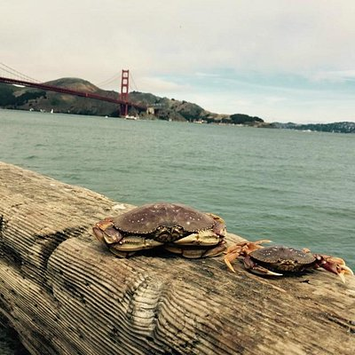 Crabs on the wharf