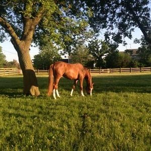 Grassy pastures for your horse