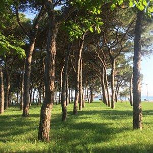 Trees in the Giardini Pubblici
