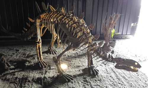Dino Skeleton!