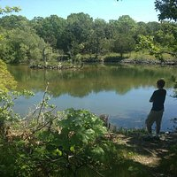 A view of the Waterfowl Pond