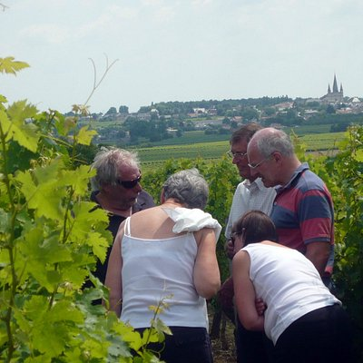 Explaining about the vines on one of our Loire Wine Tours.