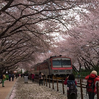 Great place for photo taking. One of the cherry blossom places MUST go