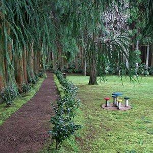 Reserva Florestal das Fontinhas em Santa Maria Açores