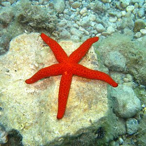 Star Fish just Hanging!
