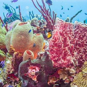 Pourpouri Reef