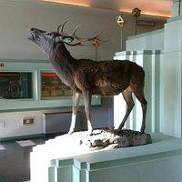 Museo del Cervo e del Bosco della Mesola