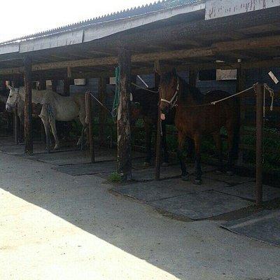 フロンテア乗馬クラブ
