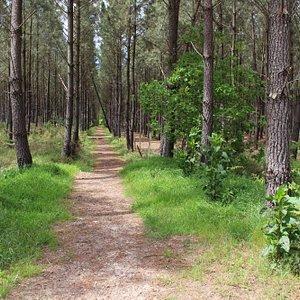Ballade au coeur de la forêt des Landes