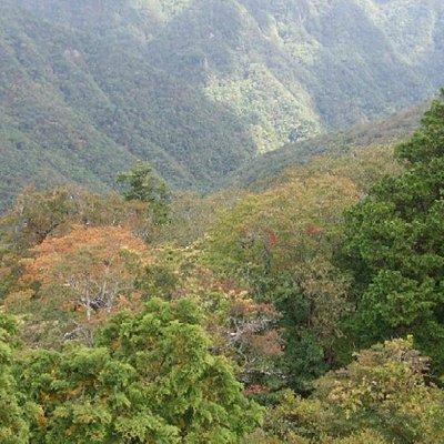 稲村ケ岳から犬取谷