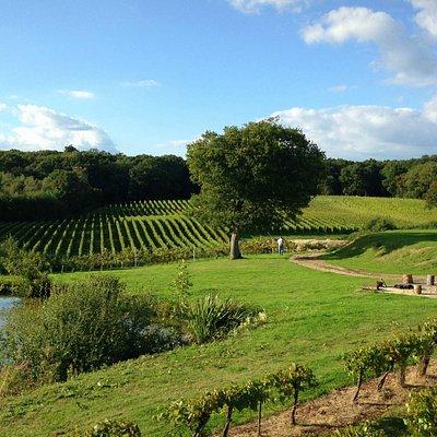 Bluebell Vineyard Estates