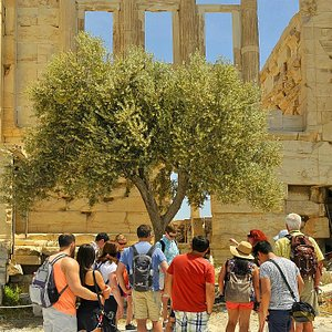 The Sacred Olive Tree on top of the Acropolis!