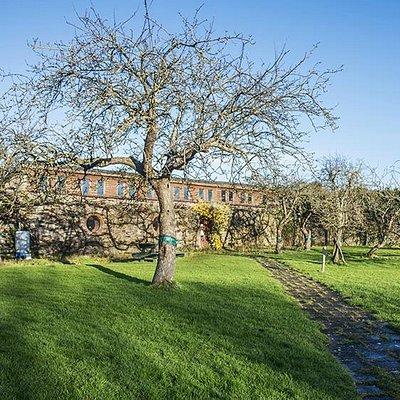 200 year old heritage apple trees at Sonairte