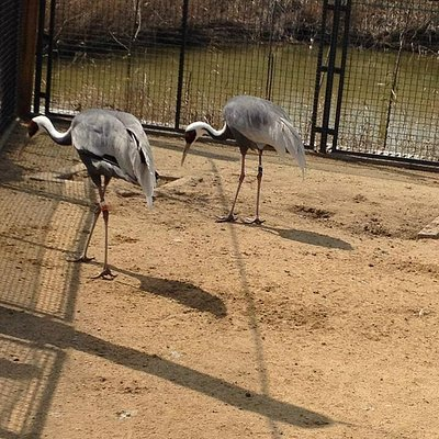 Interesting to know about cranes