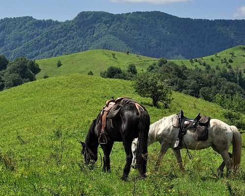 1-day horse riding in Teteven Balkan – one of the most beautiful parts of the Balkan Mountains