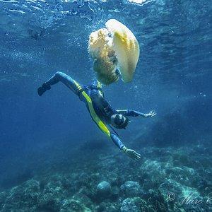 Marine life in Nha Trang