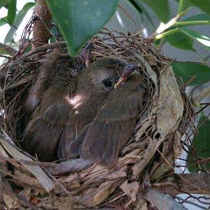 Bird's nest in my loft