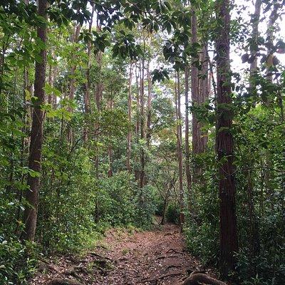 Puu Pia Hiking Trail