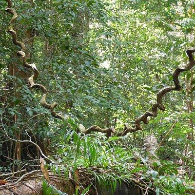 Vogelbeobachter scheuen keine Jungle Märsche