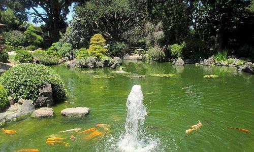 Koi, Fountain and Pond, San Mateo Japanese Garden, San Mateo, Ca