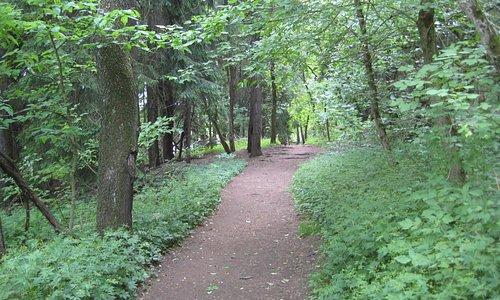 Wide open trails
