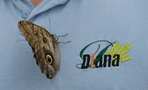 Butterflies like blue color :-)