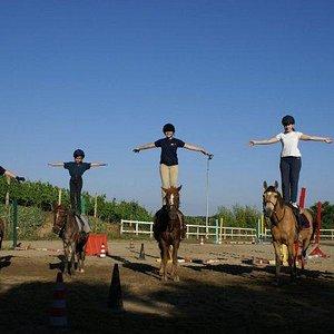 attivita coi pony