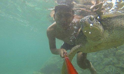 Berenang bareng penyu