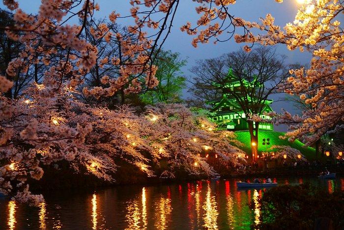 夜桜の美しさは随一です。