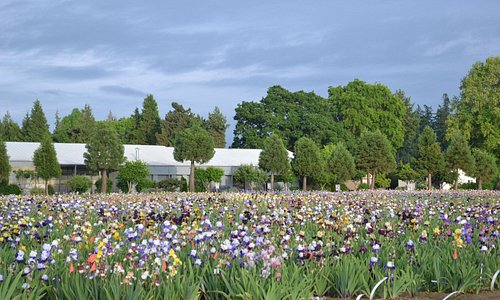 Iris Fields