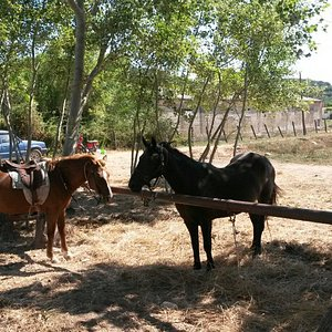 Lucky Luke Horse Riding