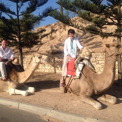 Chilled camel trip!
