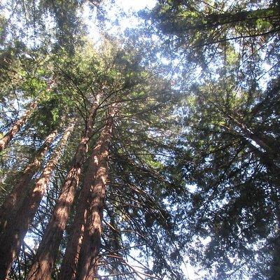 Oregon Redwood Trail, Brookings, OR