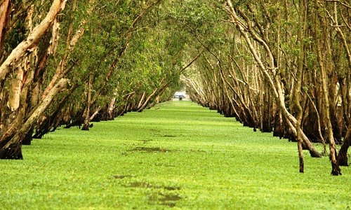 Cajaput wetland forest in Tra Su