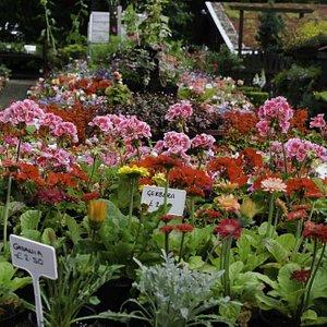 Heeley garden centre at Heely City Farm