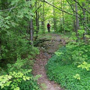 Trail with rocks