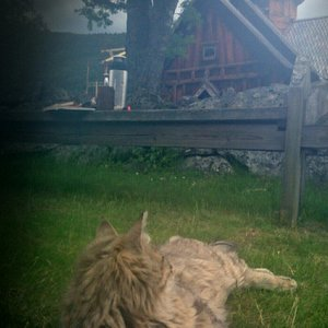 """The """"church cat"""" Lurven (the shaggy one) often greets visitors when his owners are at work and h"""