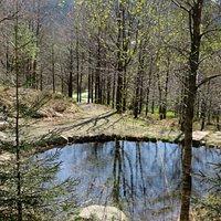 one of many pretty ponds