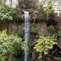 Tropical rainforest with a waterfall!