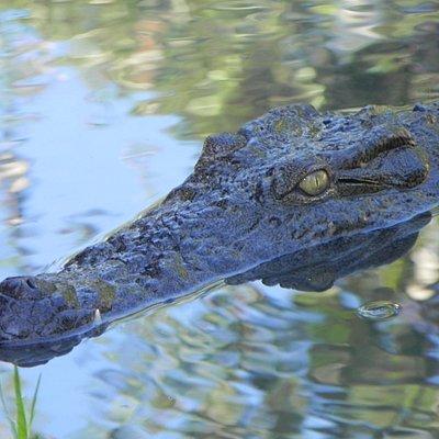 Des crocodiles à éviter