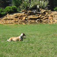 Small dog area with pond & waterfall.