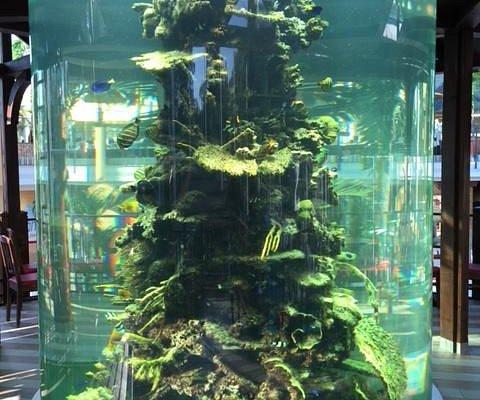Ein Teil des großen Aquariums mitten im Pool