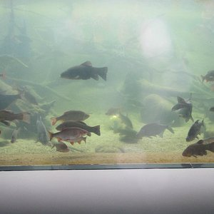 Fische zum ersten