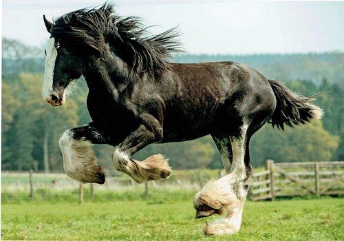 Teddy the resident stallion