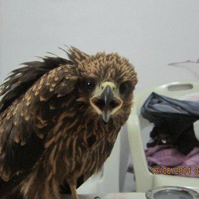 a baby eagle