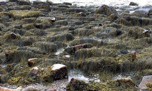 Wonderland - whimsical rocks covered with seaweed