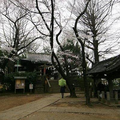 境内は、桜が満開でした