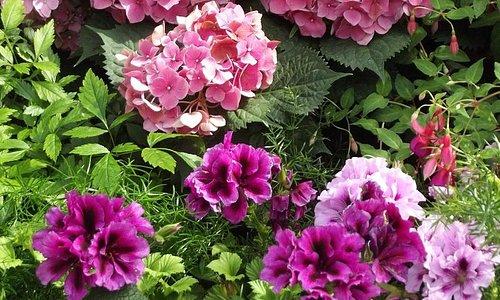 Niagara Parks Floral Showhouse