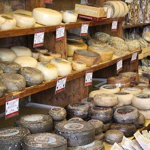 Assorted delicious pecorino cheeses
