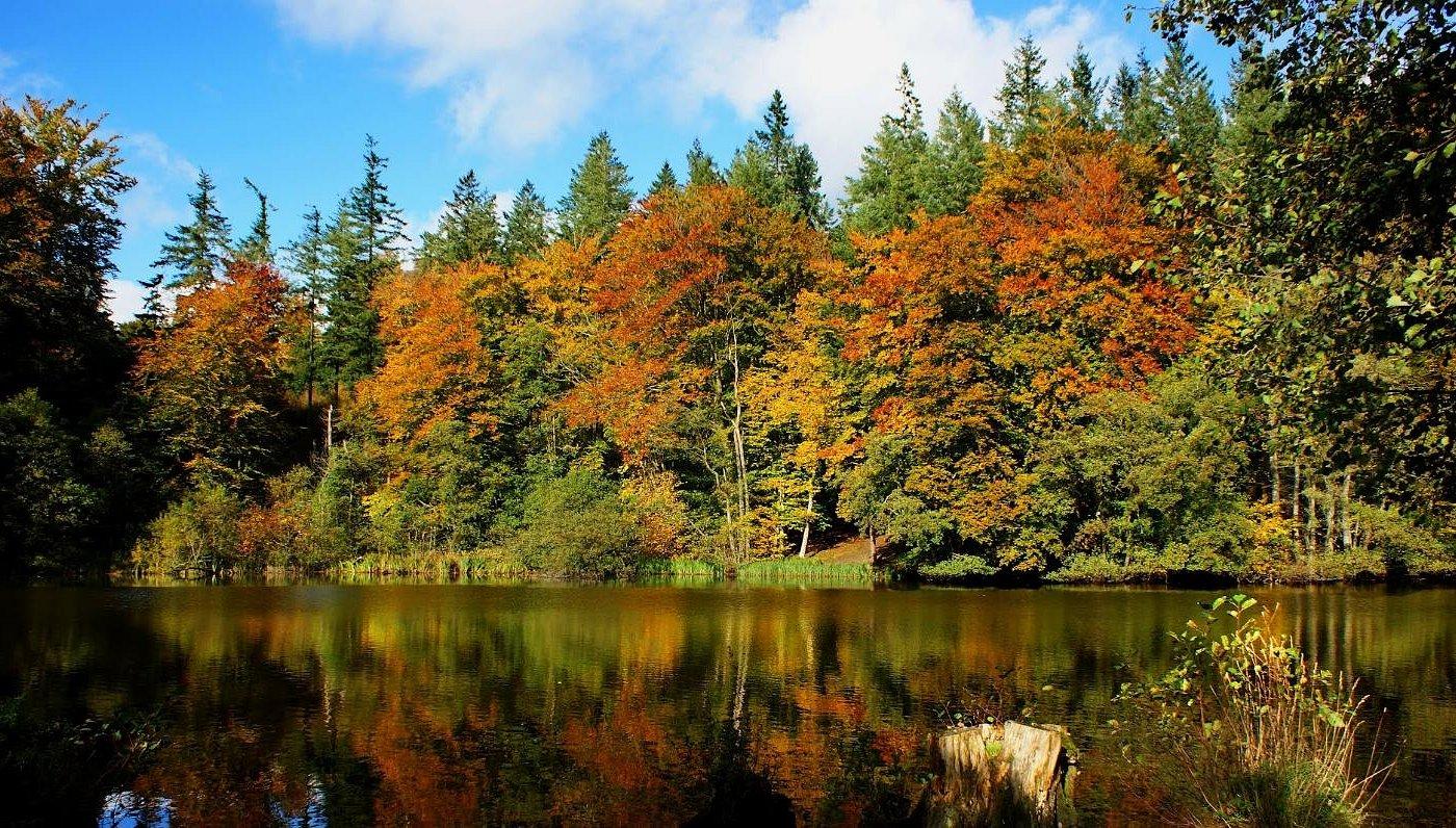 Skoven omkring møllen